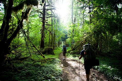 Best Hikes in Washington's Olympic National Park