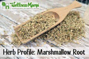 How to Use Marshmallow Root for Better Health