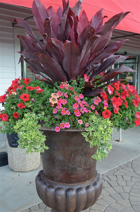 Great potting idea from our very own Maria! What's inside